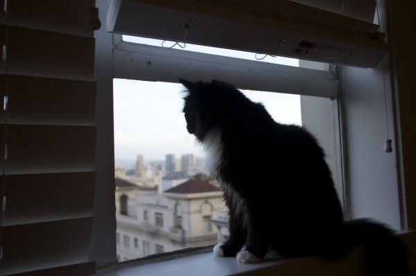Cozmo looks out the window at her new city
